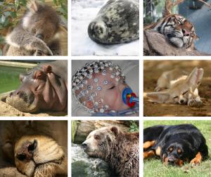 Animales durmientes